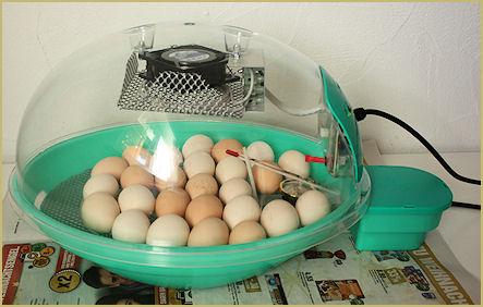 Inkubator mit eingelegten Eiern