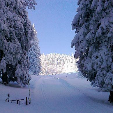 Morgenstimmung im Winterwald