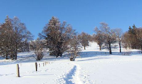 Schneeschuhpfad Richtung Jurahaus