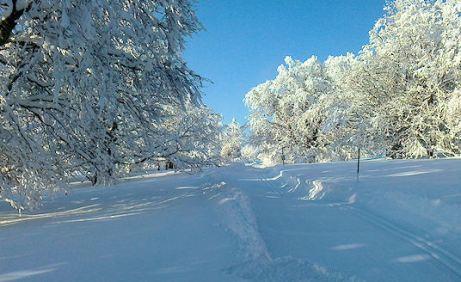 verschneite Bäume im Berner Jura