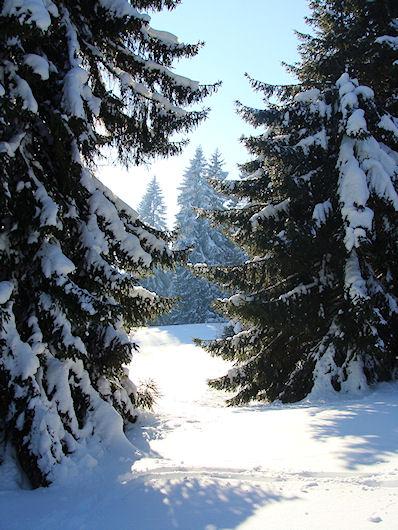typische Jurafichten in der Winterlandschaft