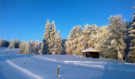 verschneite Bäume mit blauem Himmel