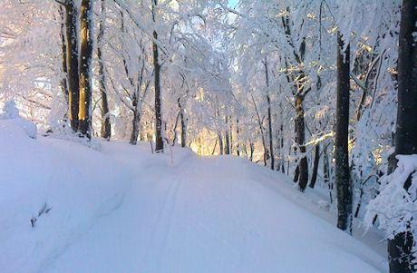 Winterwanderweg im Jura
