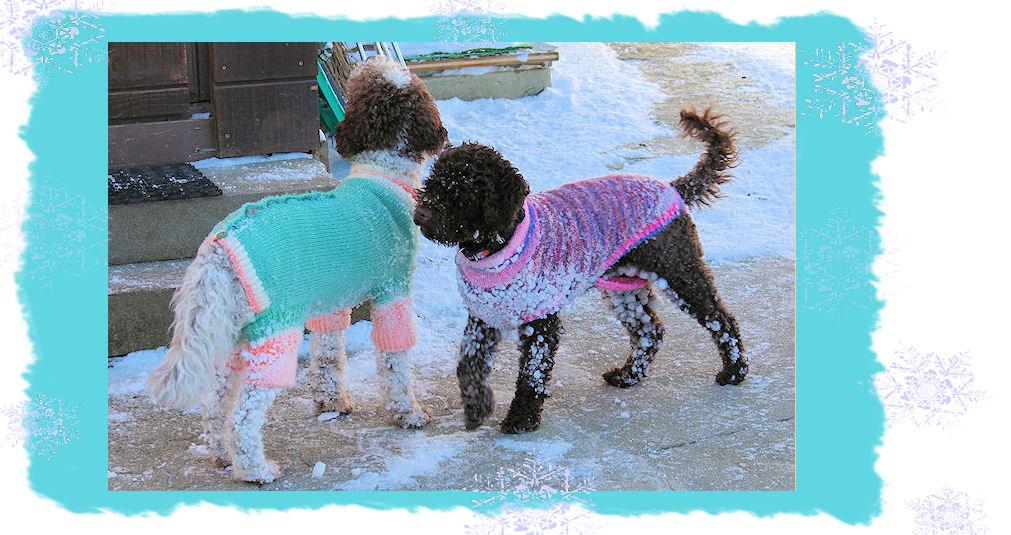 Hundemantel, gestrickt für einen mittelgrossen Labradoodle ...