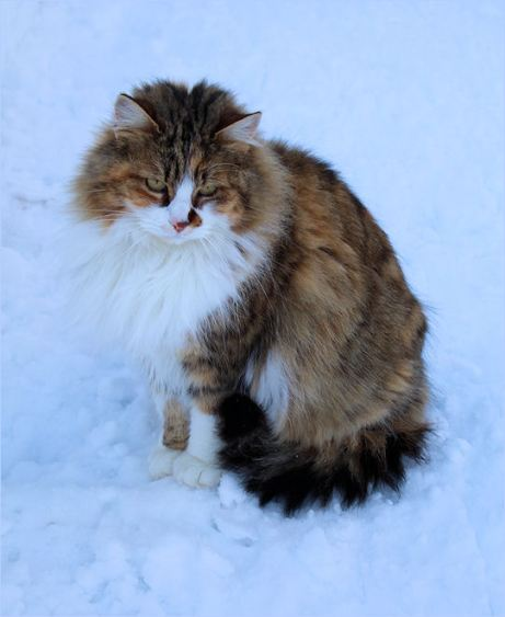 Carlotta_im_Schnee